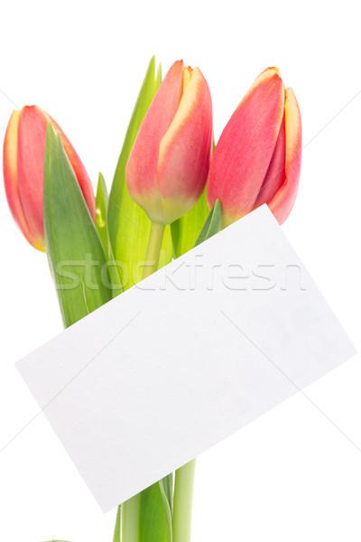 Rose jaune tulipes carte vierge blanche feuille Photo stock © wavebreak_media