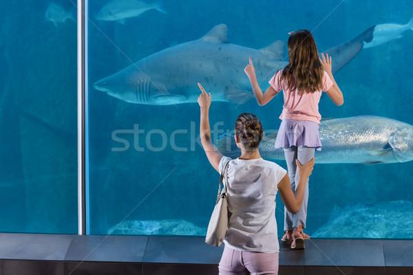 Família feliz olhando peixe tanque aquário criança Foto stock © wavebreak_media