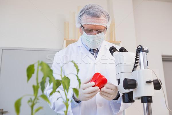 Food scientist looking at red pepper  Stock photo © wavebreak_media