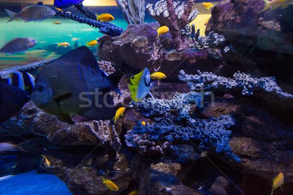 Pesce nuoto serbatoio corallo acquario Foto d'archivio © wavebreak_media