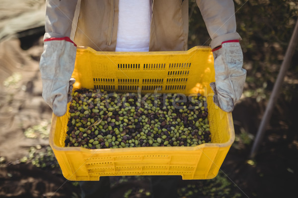 Man carrying olives in crate at farm  Stock photo © wavebreak_media