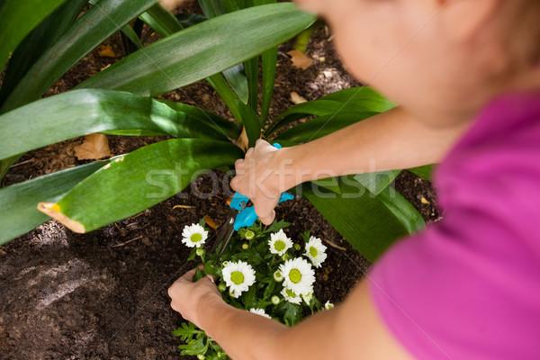 Kép nő vág virágzó növény természet Stock fotó © wavebreak_media