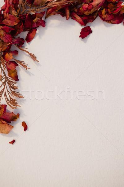 Kurutulmuş sonbahar yaprakları beyaz doğa yaprak kahvaltı Stok fotoğraf © wavebreak_media