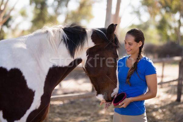 Sorridente feminino jóquei limpeza cavalo em pé Foto stock © wavebreak_media