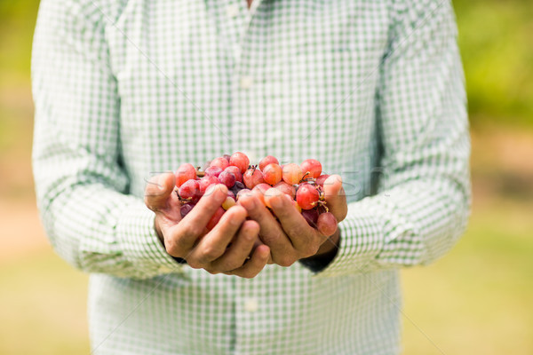 Mid section of vintner holding grapes Stock photo © wavebreak_media