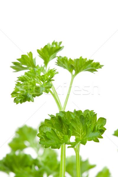 Close up of blurred chervil sprigs against a white background Stock photo © wavebreak_media