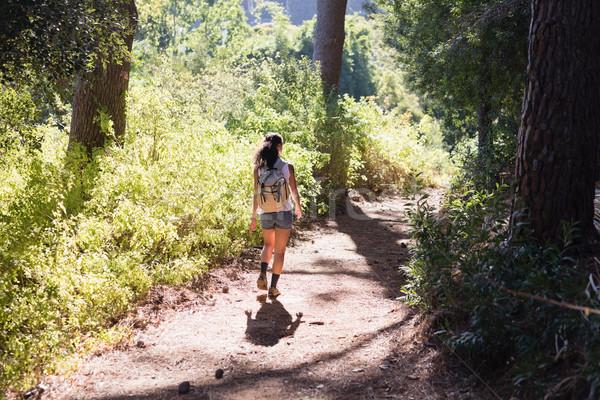 Vue arrière femme randonnée sentier forêt jeune femme Photo stock © wavebreak_media