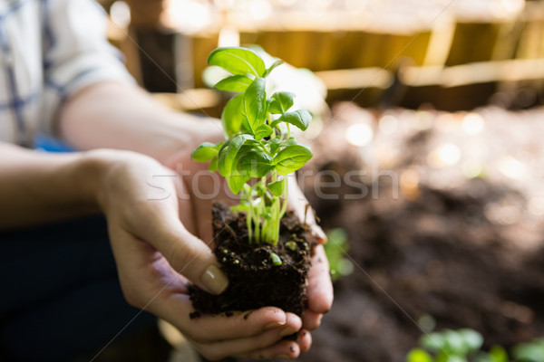 Femme gaules usine jardin Photo stock © wavebreak_media