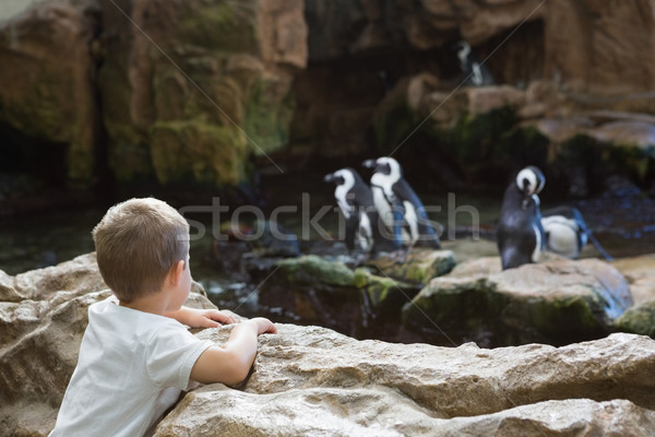 мало мальчика глядя ребенка рок весело Сток-фото © wavebreak_media