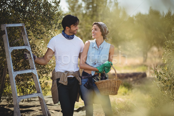 Young couple standing by ladder at olives farm Stock photo © wavebreak_media