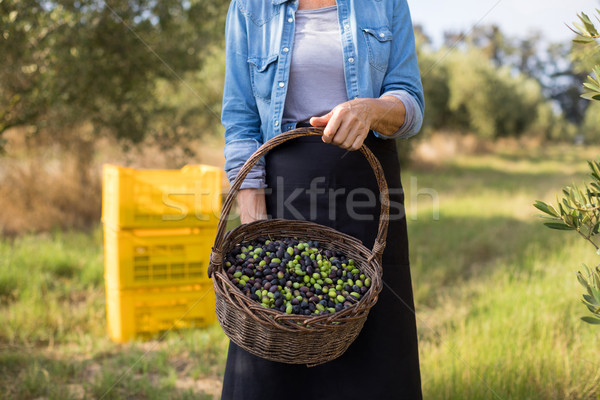 Mid section of woman holding harvested olives in basket Stock photo © wavebreak_media