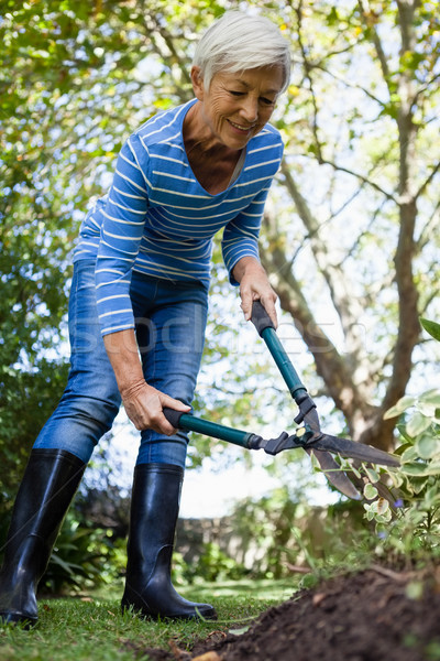 Low angle view of smiling senior woman using hedge trimmers Stock photo © wavebreak_media