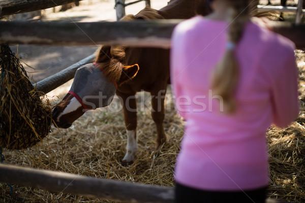 Fille cheval ranch enfant Photo stock © wavebreak_media