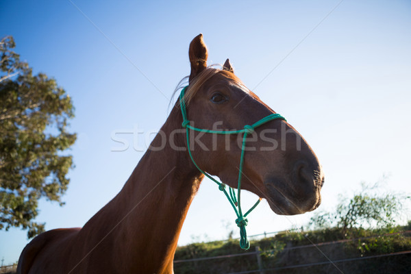 Horse standing in the ranch Stock photo © wavebreak_media