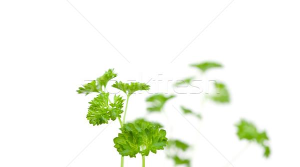 Blurred chervil springs against a white background Stock photo © wavebreak_media