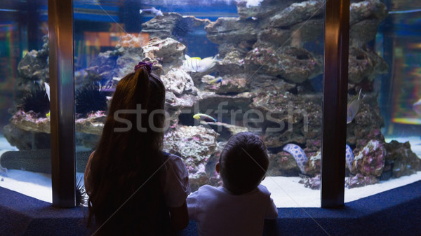 Little siblings looking at fish tank Stock photo © wavebreak_media