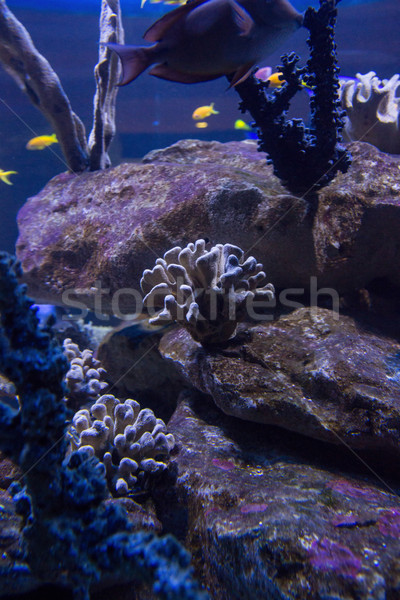 Corals and stones in a tank with swimming fish  Stock photo © wavebreak_media