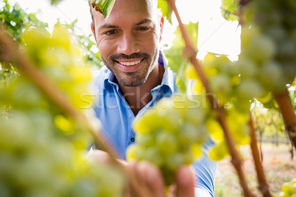 Smiling man touching grapes Stock photo © wavebreak_media
