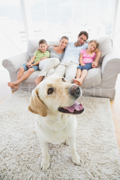 Happy family sitting on couch with their pet yellow labrador on  Stock photo © wavebreak_media