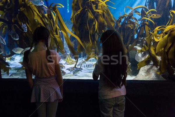 Cute children looking at fish tank Stock photo © wavebreak_media