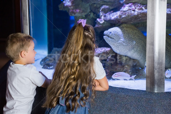 Stock fotó: Kicsi · testvérek · néz · hal · tank · akvárium