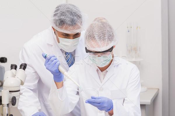 Scientist doing experiments in petri dish  Stock photo © wavebreak_media