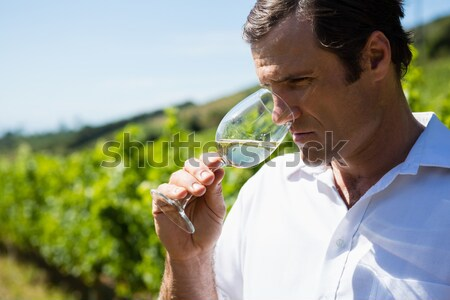 Vintner smelling glass of wine Stock photo © wavebreak_media