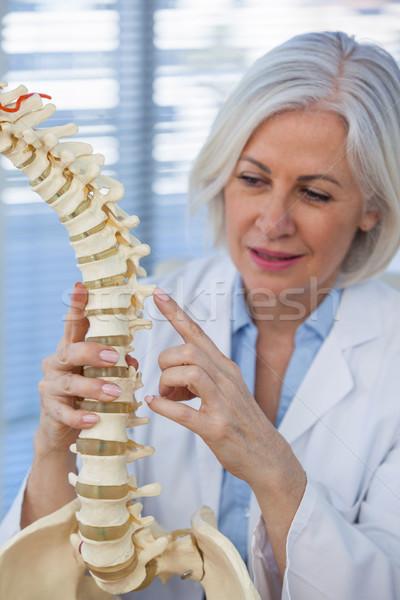 Női orvos tart gerincoszlop modell orvosi Stock fotó © wavebreak_media