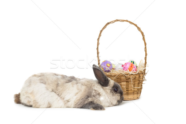 Fluffy bunny with basket of Easter eggs Stock photo © wavebreak_media