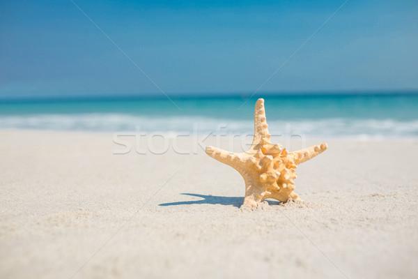 Denizyıldızı kum plaj doğa deniz Stok fotoğraf © wavebreak_media