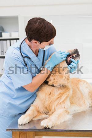 Glimlachend dierenarts onderzoeken mooie Maine medische Stockfoto © wavebreak_media