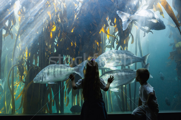 Сток-фото: мало · глядя · рыбы · цистерна · аквариум