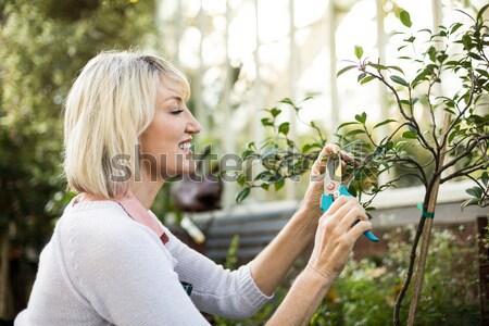 美人 調べる 庭園 ツリー 葉 ストックフォト © wavebreak_media