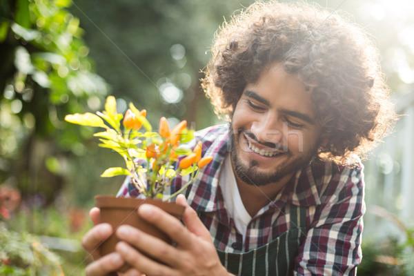Gardener holding potted plant outside greenhouse Stock photo © wavebreak_media