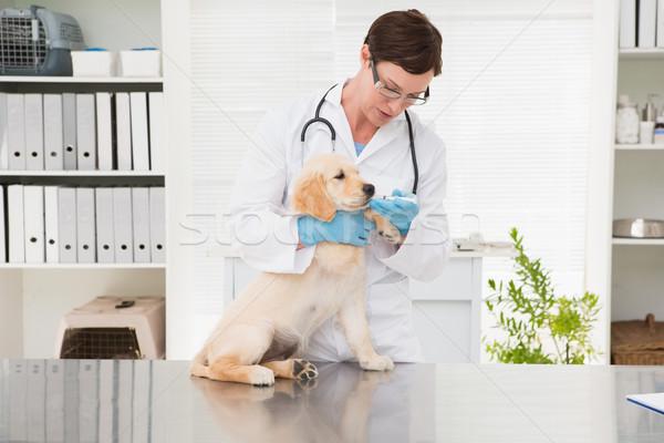 Lekarz weterynarii muzyka psa medycznych biuro kobieta Zdjęcia stock © wavebreak_media