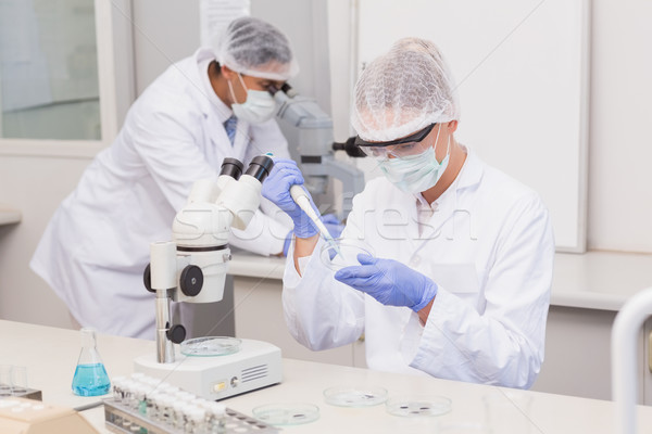 Scientist examining petri dish  Stock photo © wavebreak_media