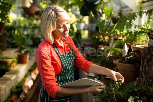 Gardener with clipboard inspecting plants  Stock photo © wavebreak_media