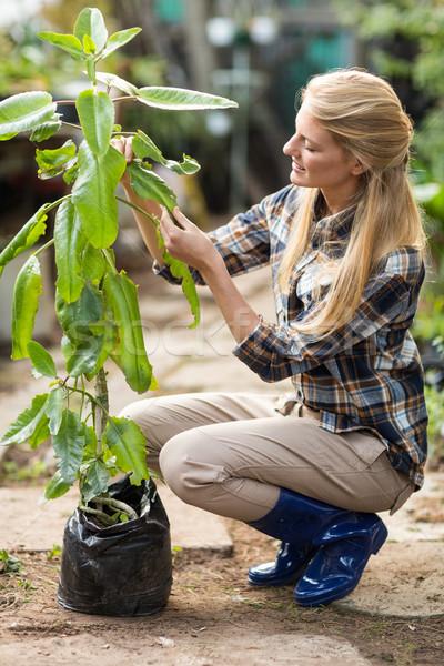 Femenino jardinero examinar invernadero vista lateral Foto stock © wavebreak_media