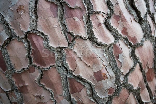 Ağaç havlama orman Internet mutlu Stok fotoğraf © wavebreak_media