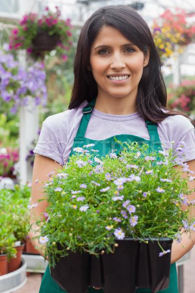 Jardineiro plantas caixas jardim centro Foto stock © wavebreak_media