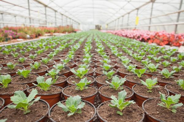 Plantes fleurs horticulture laisse usine soins Photo stock © wavebreak_media