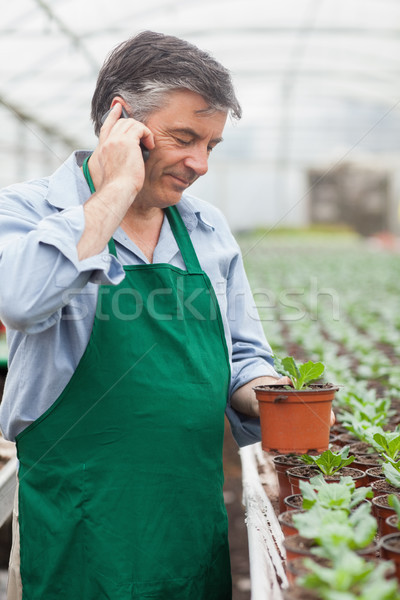 Greenhouse worker holding potted seedling and phoning in greenhouse Stock photo © wavebreak_media