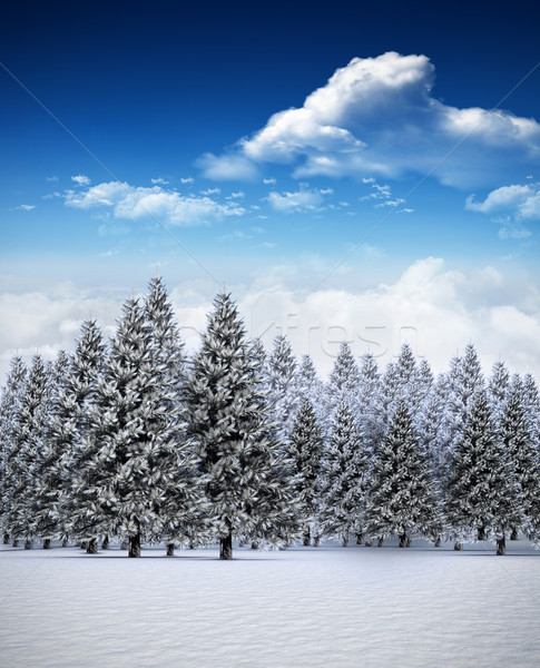 Fir tree forest in snowy landscape Stock photo © wavebreak_media