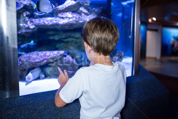 Young man looking at fish in a tank  Stock photo © wavebreak_media