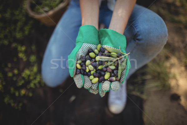Mid section of woman showing olives at farm Stock photo © wavebreak_media