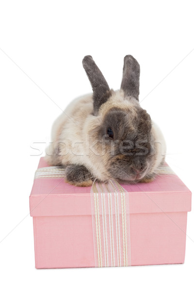 Bunny sitting on top of pink gift box Stock photo © wavebreak_media