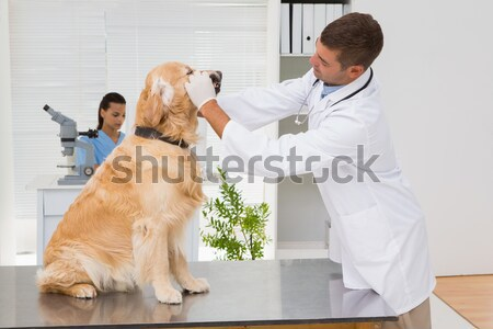 Stok fotoğraf: Veteriner · sevimli · köpek · tıbbi