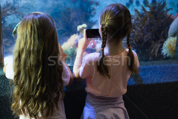 Cute filles regarder poissons réservoir aquarium Photo stock © wavebreak_media