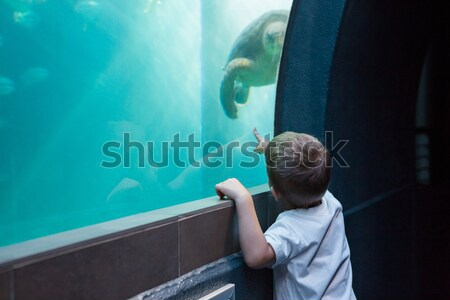 Little boy looking at fish tank Stock photo © wavebreak_media