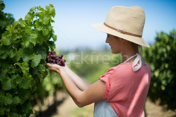 Gelukkig wijngaard vrouwelijke landbouwer Stockfoto © wavebreak_media